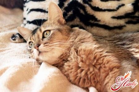 понос у кошки как лечить