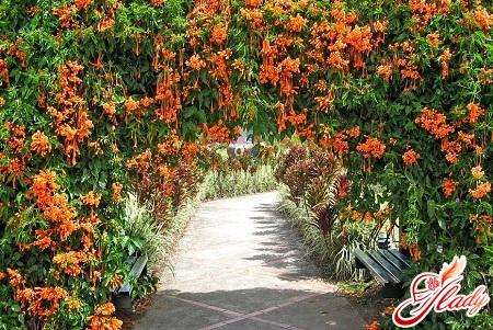 Вьющиеся растения особенности роста
