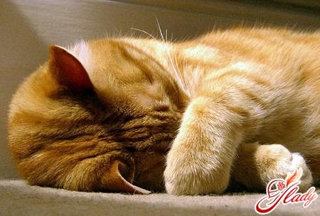 цистит у кошек лечение