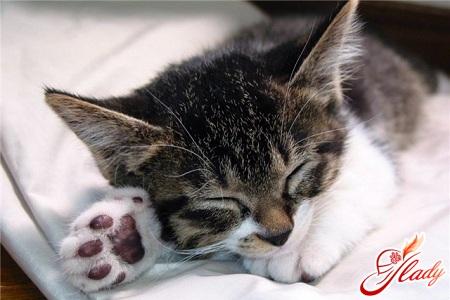 чем лечить лишай у кошек