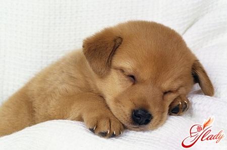 цистит у собак лечение