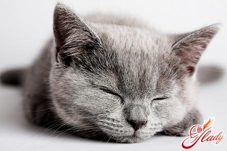 кошки беременность и роды