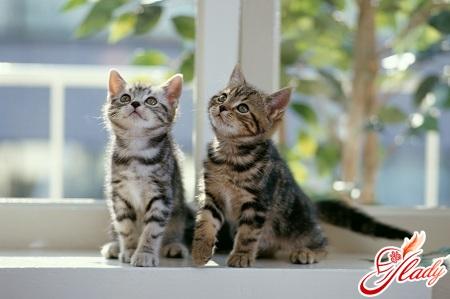 как вывести запах кошачьей мочи дома