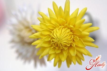 цветы своими руками из пластика