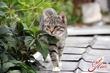 кошки беременность