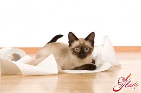 как взрослую кошку приучить к лотку