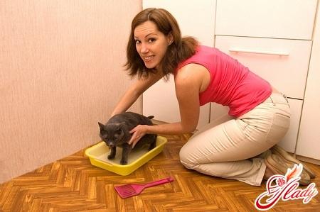 как приучить к лотку взрослую кошку