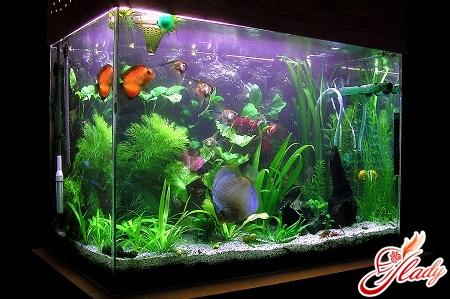 как ухаживать за рыбками в аквариуме