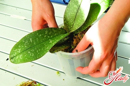 грунт для орхидей состав