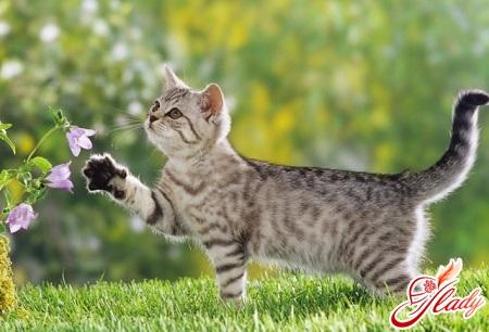 Чем кормить кастрированного кота: особенности составления рациона