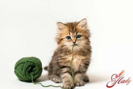 чем лучше кормить кота