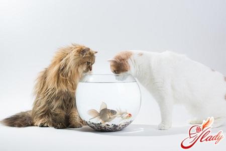 чем кормить стерилизованную кошку