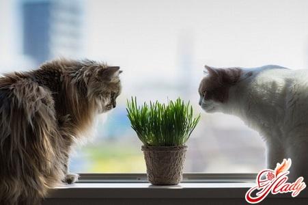 чем кормить стерилизованных кошек
