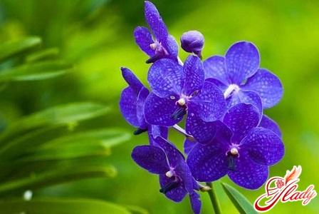 как спасти орхидею