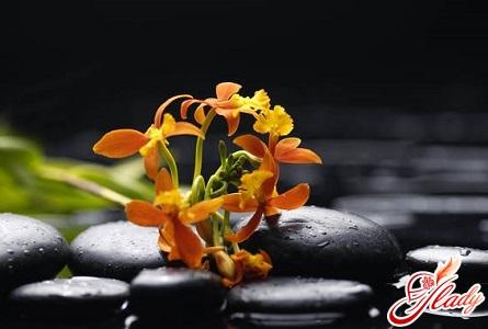 как спасти орхидею надолго