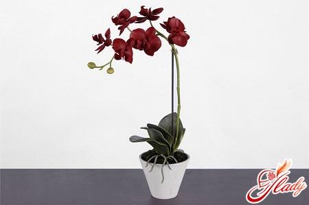 Букете невесты цветок орхидеи в горшке мужской букет