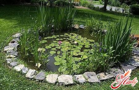 чудесный водоемы в саду своими руками