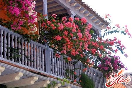 как украсить балкон или лоджию цветами