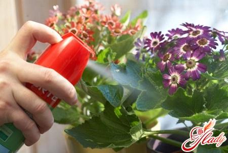 болезни домашних цветов
