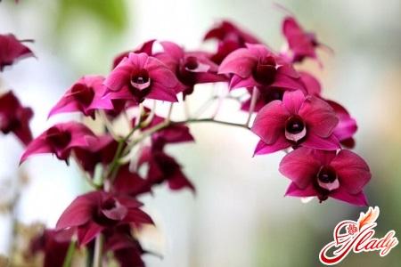 красивое цветение орхидей