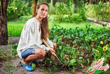 выращивание цветной капусты на открытом грунте