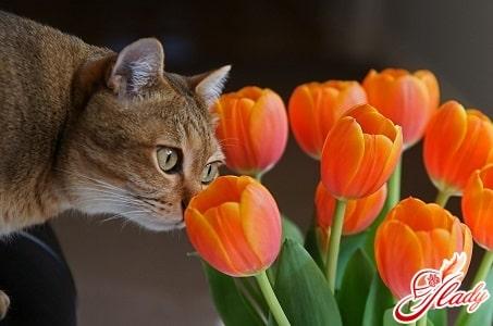 Как лечить бронхиальную астму у кошек?