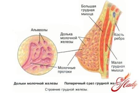 Когда при беременности начинает расти грудь
