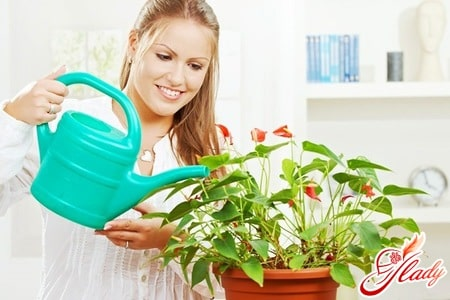 Экзотические растения для дома: выбираем правильно!