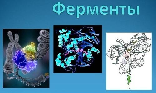 Во время 1 фазы развития патологии внутри формирующихся полостей в поджелудочной накапливаются ферменты