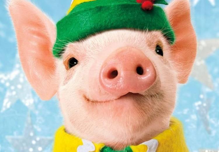 Готовимся к встрече Земляной Свиньи: какого цвета наряд выбрать, что приготовить на Новый год